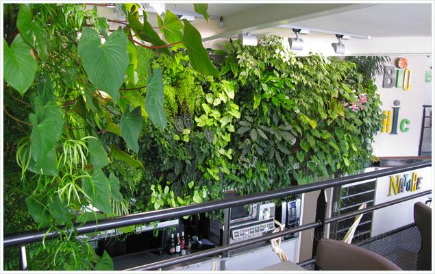 mur vegetal restaurant orleans 636x400