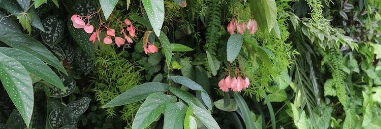 louer-mur-vegetal-pas-cher-decor-plante-evenement