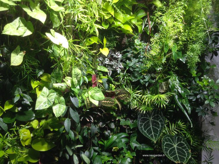 mur-vegetal-ambience