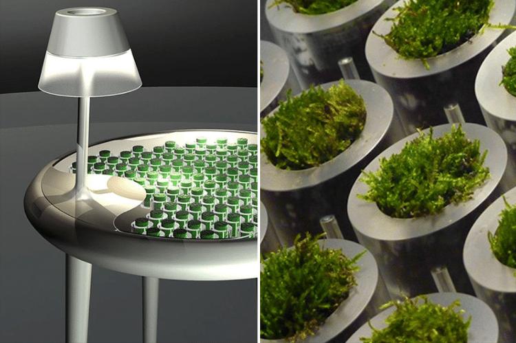 energie-plante-technologie-ecologie