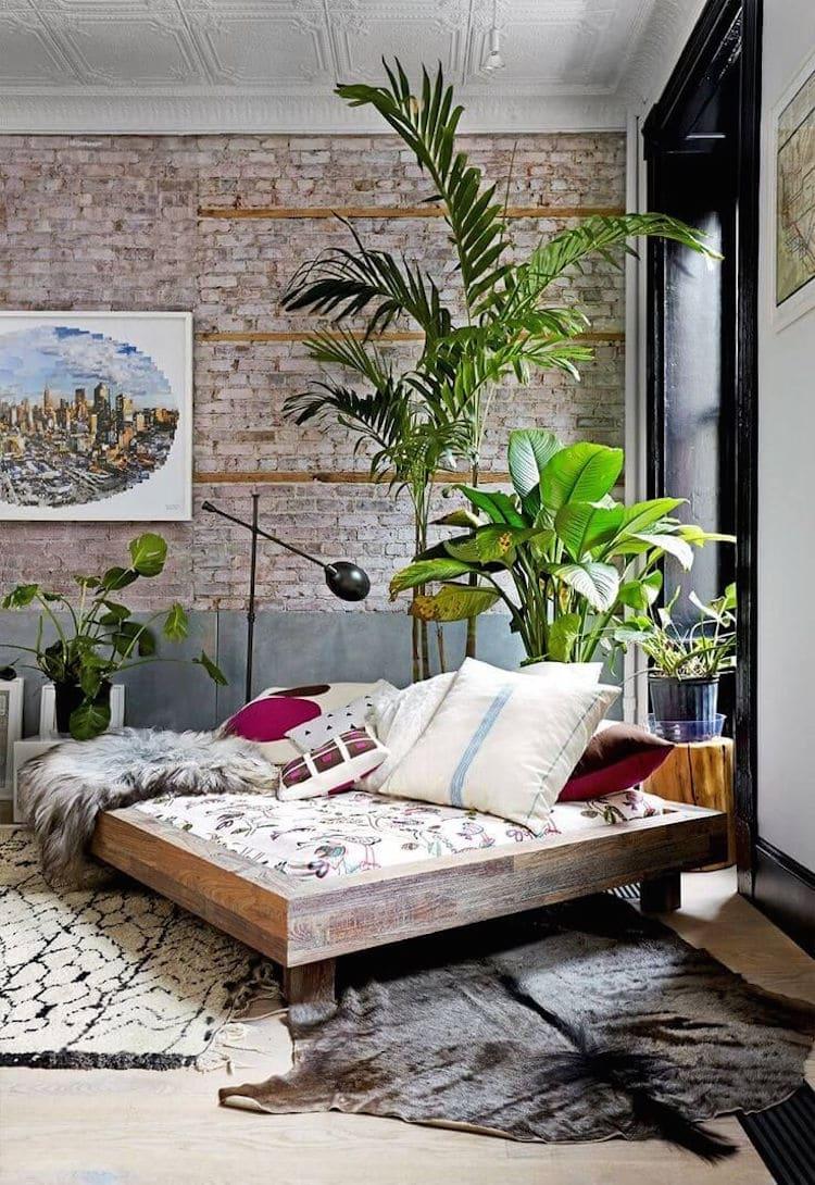 Plante Verte Dans Chambre
