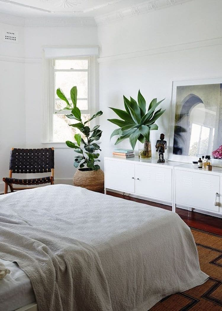les plantes représentent-elles un danger dans la chambre ? - Plante Verte Dans Une Chambre A Coucher