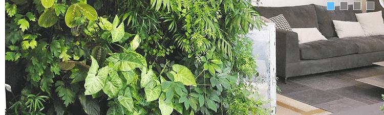 mur-végétal-boutique-achat-en-ligne