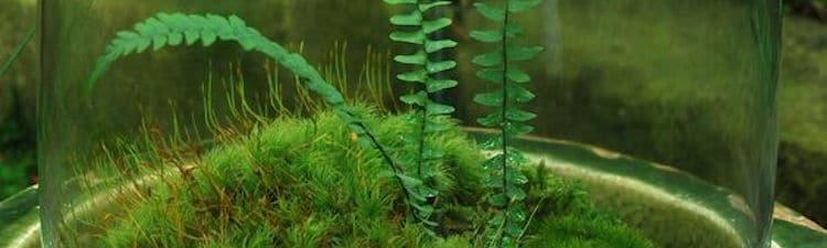 terrarium-humide-fougere-mousse