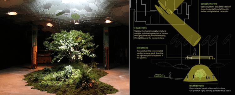 metro-vegetaux-sous-terraine-plante