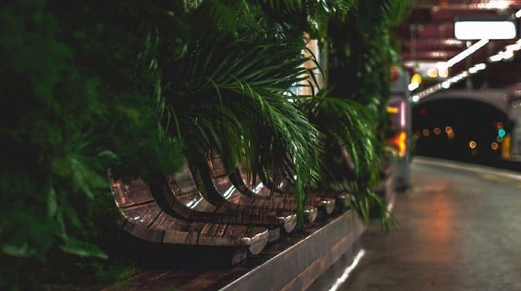 mur-vegetal-metro
