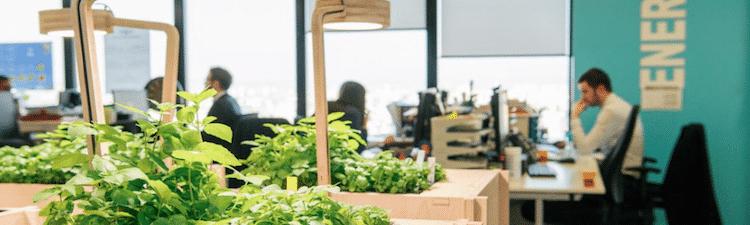 potager-entreprise-cultiver-interieur-jardin