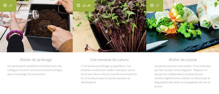 services-potager-jardiner-au-bureau