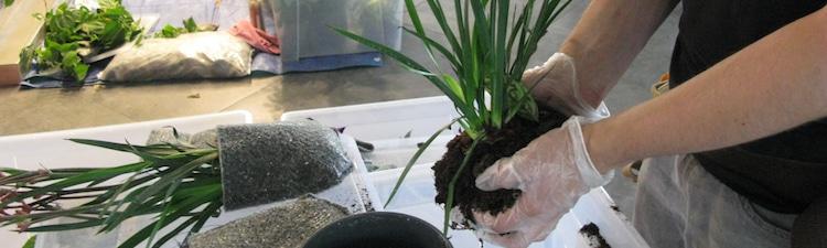 préparer-plantes-pour-mur-vegetal