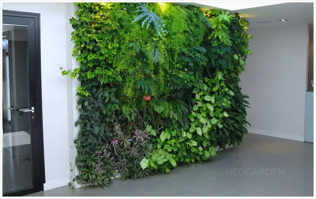 mur végétal dans une clinique