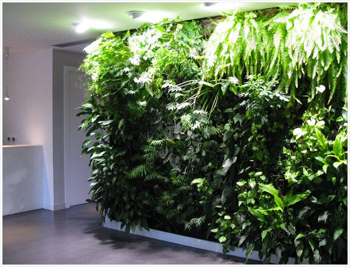 Clinique Auclert-Molco, un mur végétal au RDC