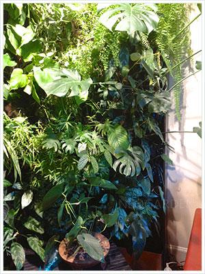 mur vegetal neuilly 300x400