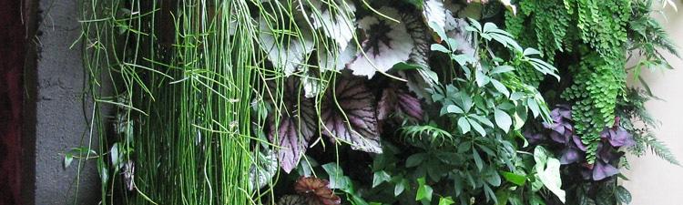 ambiance-Angers-mur-vegetal