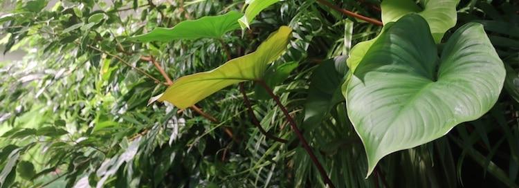 plantes dans un écosystème vivant