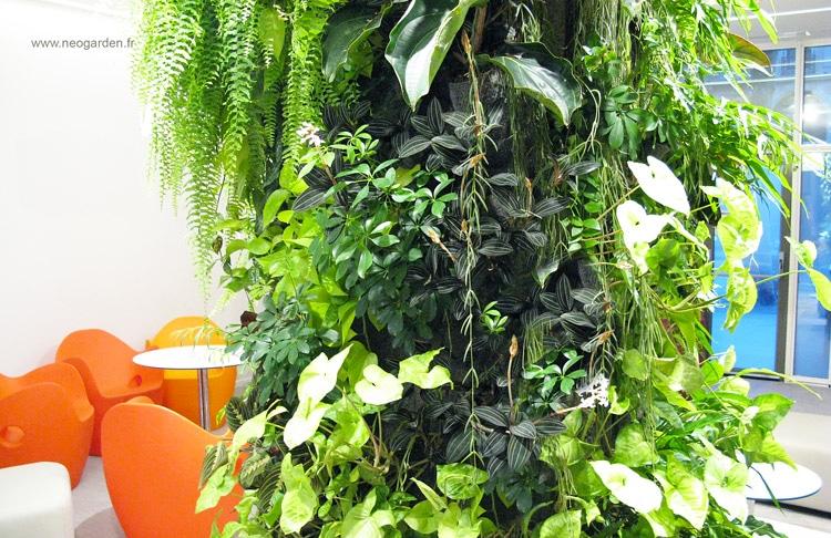 ludisia-mur-vegetal