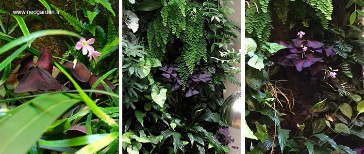 oxalis-jardin-vertical