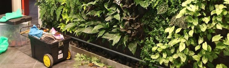entretien-mur-vegetal