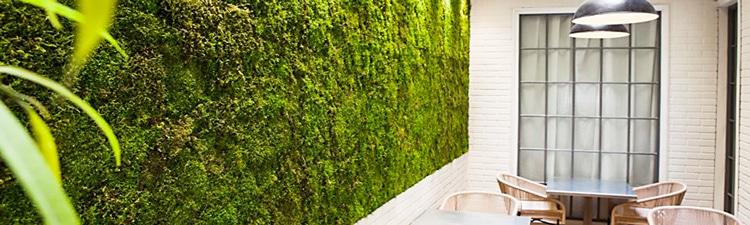Mur Végétal naturel ou Mur stabilisé