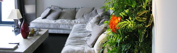 Témoignage : un mur végétal dans le salon
