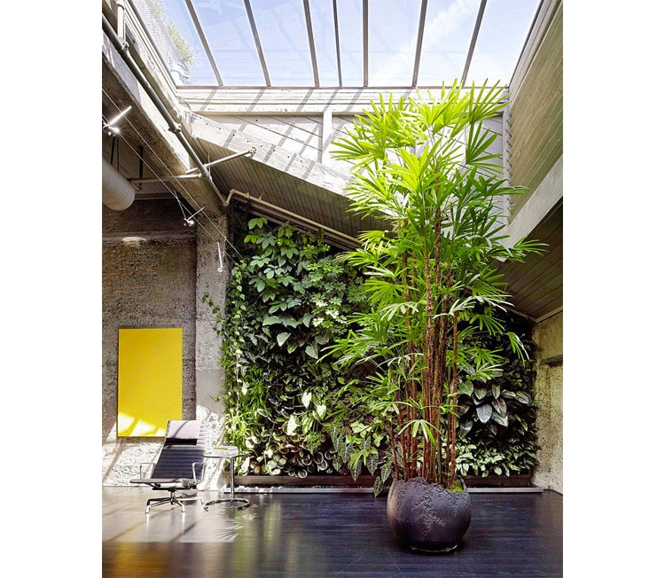 loft mur vegetal verriere