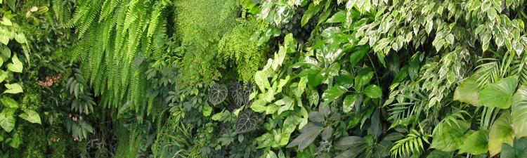Faire un mur végétal : tout ce qu'il faut savoir