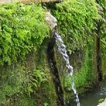 Système d'arrosage du mur végétal en 4 étapes
