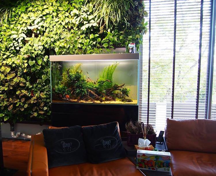 aquarium-mur-vegetalise