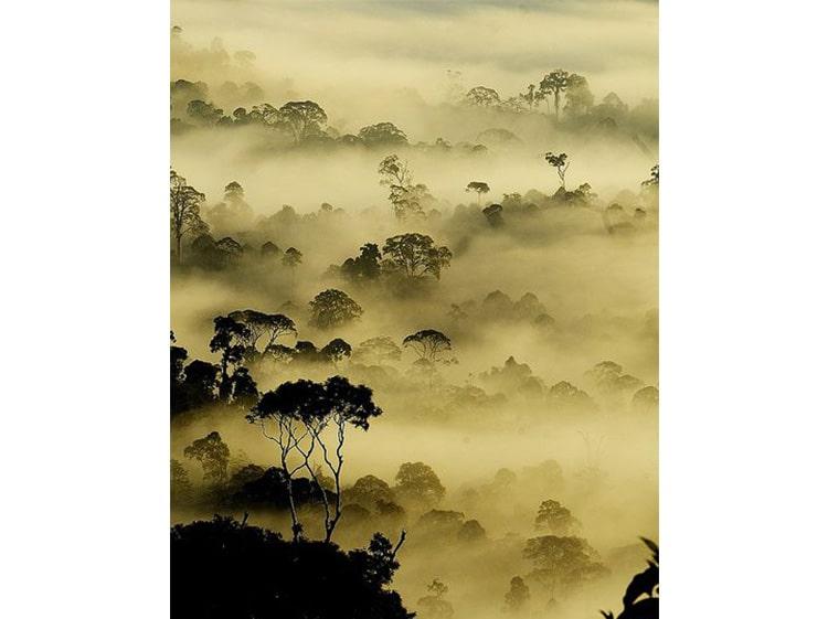 foret-brouillard