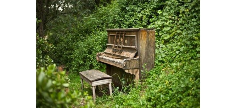 Le mur v g tal et ses bienfaits for Jardin secret piano
