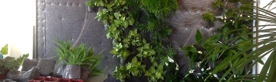 Témoignage : Décorer son appartement avec des plantes
