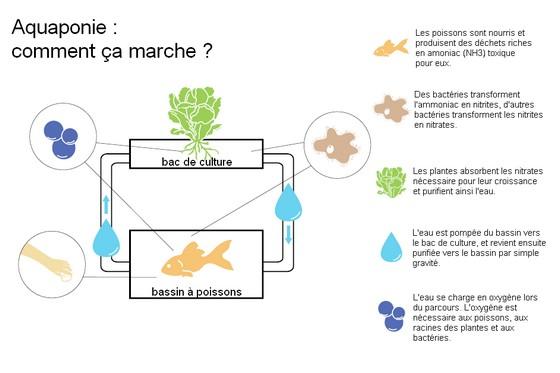 aquaponie-principes