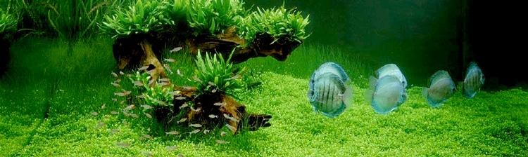 Aquaponie et mur végétalisé