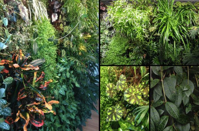 decorer-son-appartement-avec-des-plantes