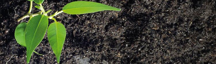 Compost et traitement des déchets verts