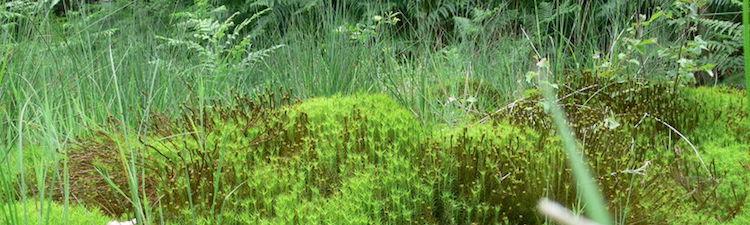 La Sphaigne : un substrat aux propriétés uniques