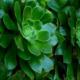 Les Plantes représentent-elles un danger dans les chambres à coucher ?