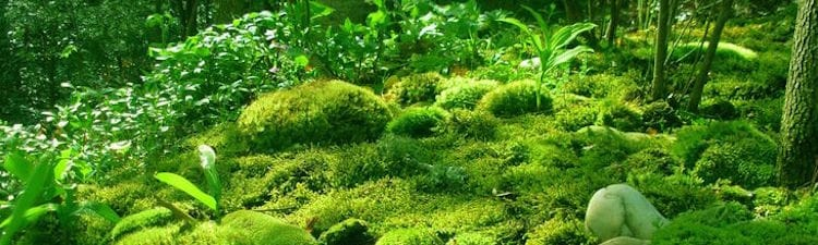 plante-energie-lumiere