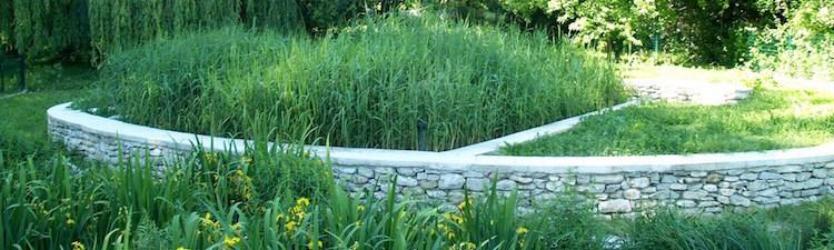 La Phyto-épuration ou l'assainissement par les plantes.
