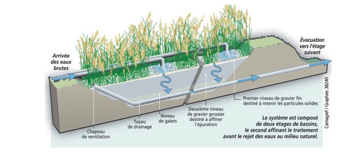 Genie v g tal les jardins d 39 assainissement - Lagunage des eaux usees ...