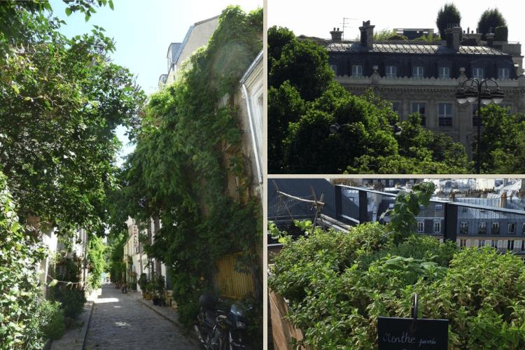 paris-vegetation-urbaine