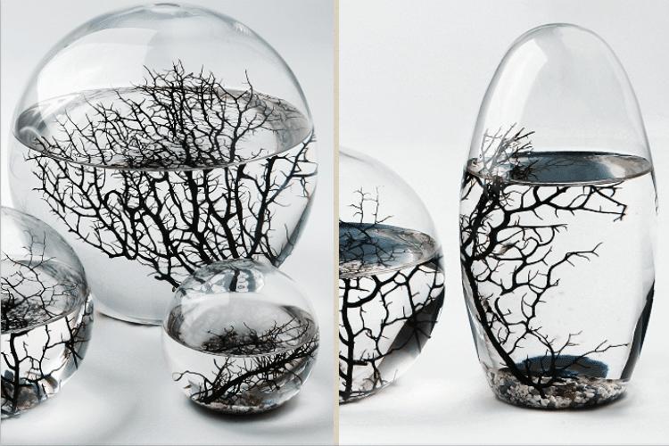 ecosystème-ferme-autonome-aquarium