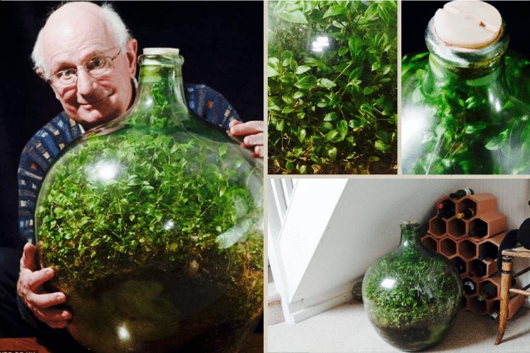 écosystème-plante-interieur-bouteille