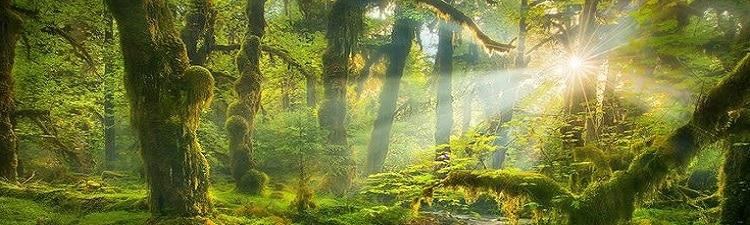 Luminothérapie et Mur Végétal contre la dépression saisonnière