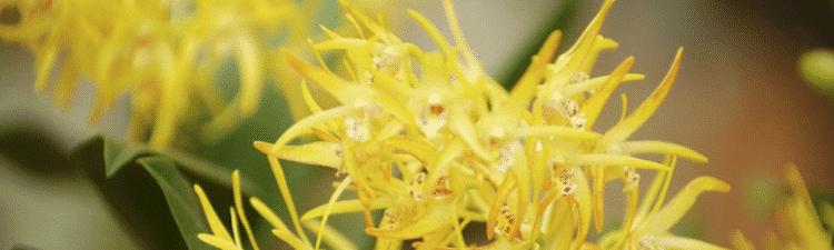 Documentaire : Drôles de Plantes E02