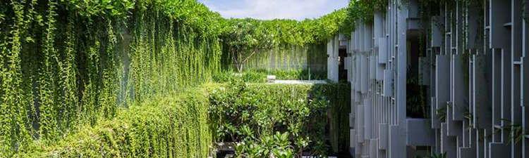Le Végétal dans le Bâtiment – Murs et Toits végétalisés