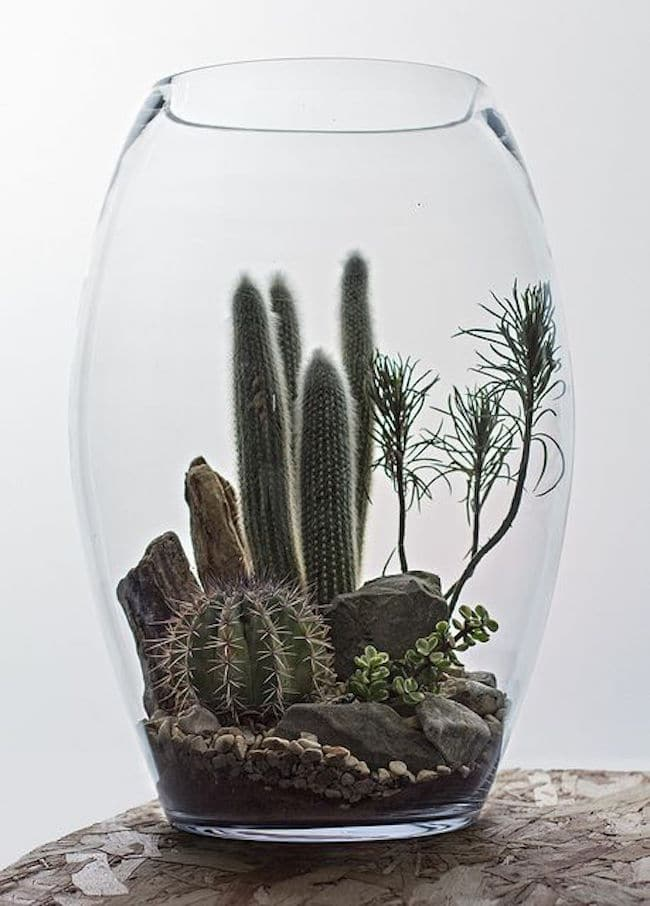 terrarium-succulentes-sec-sans-entretien