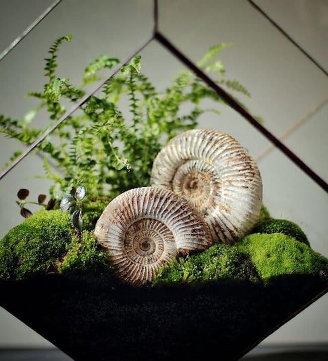 terrarium-humide