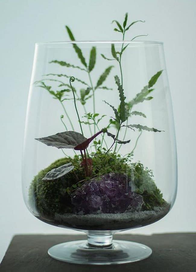 terrarium-plantarium