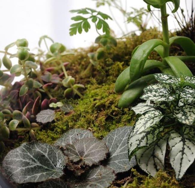terrarium-les-plantes-pour