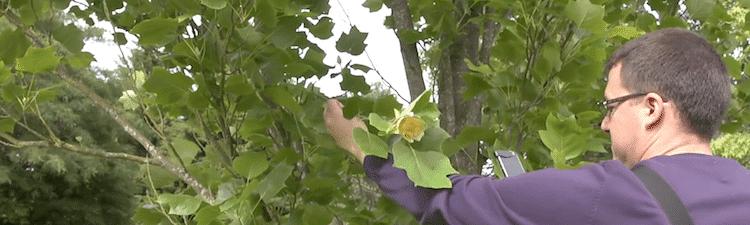Reconnaître les plantes grâce à son smartphone